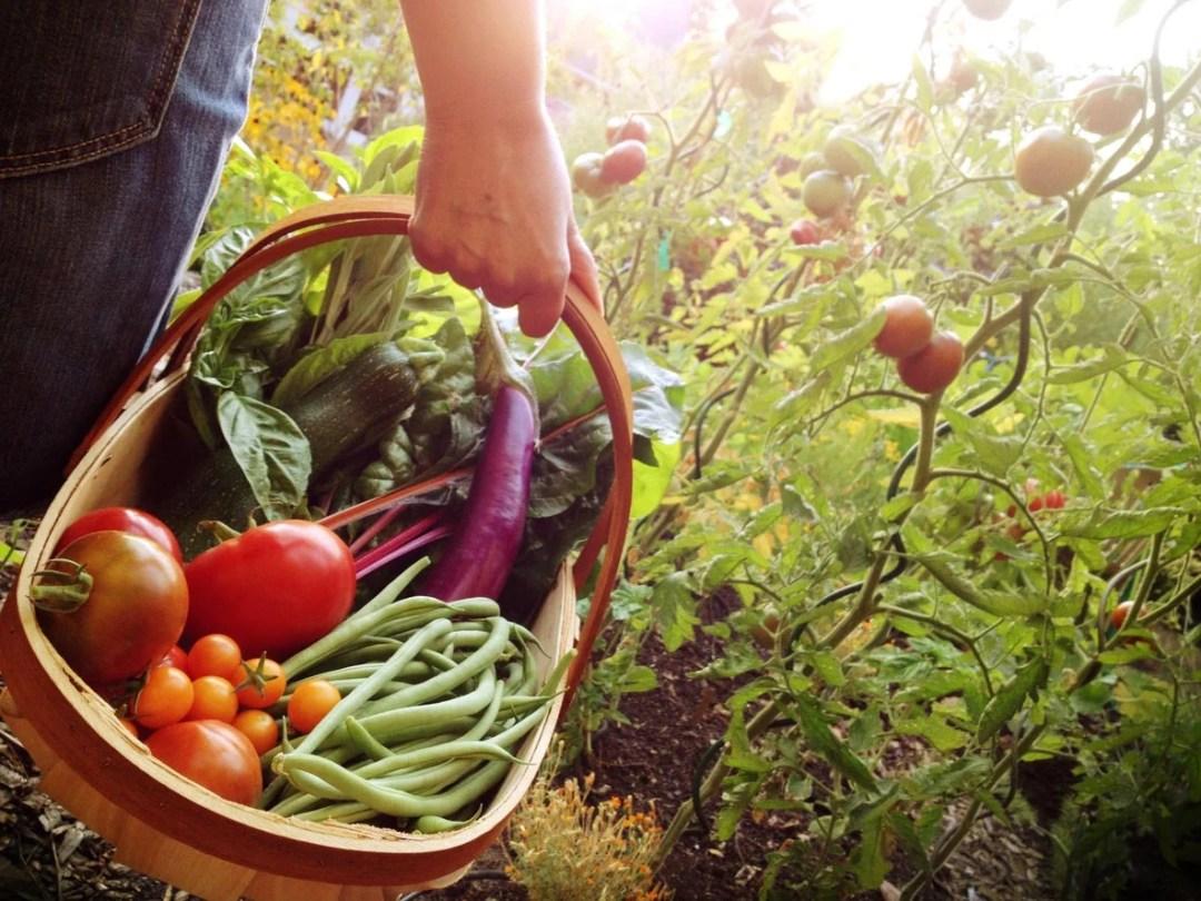 女人抱著一籃子新鮮採摘的蔬菜