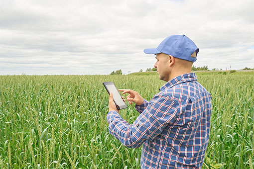 Male farmer standing in field of corn wearing a plaid shirt and blue baseball cap. He is holding a tablet device and reviewing the screen.