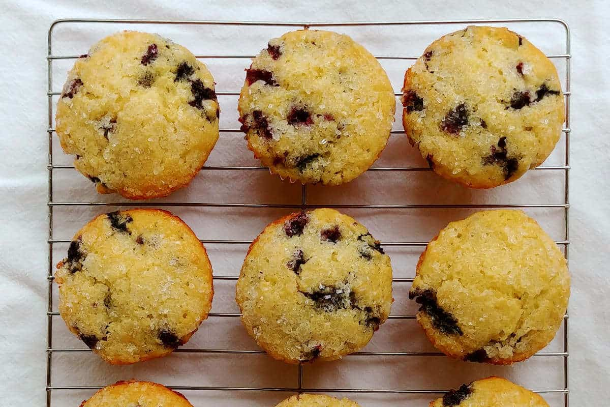 perfect blueberry muffins, on a baking rack, in rows, seen from overhead