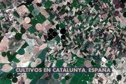Cultivos-en-Catalunya-en-España
