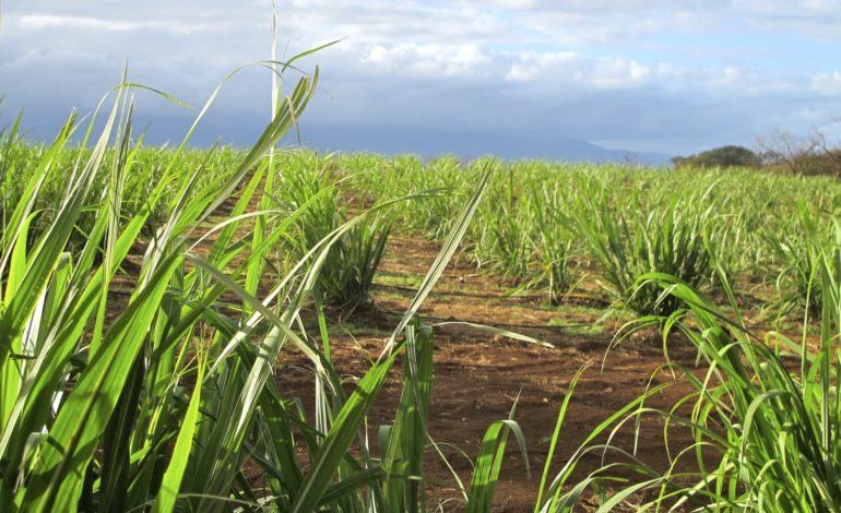 Hawaii Agriculture
