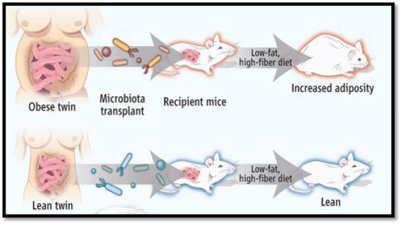 foodtechpathshala, microbiome