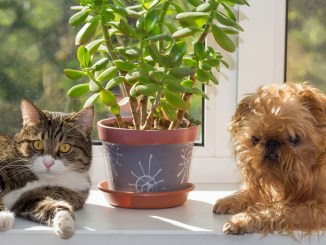 19 toxic indoor plants to pets