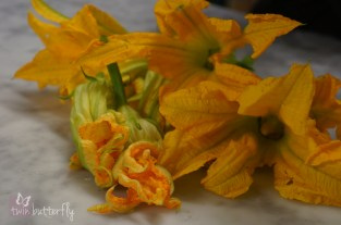 Beautiful zucchini flowers