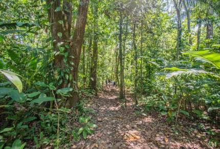 Adopteer jouw eigen stukje regenwoud in Costa Rica!