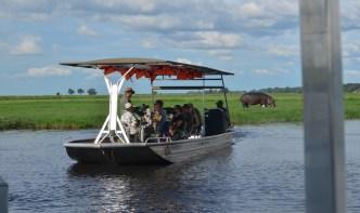 chobe-river-04-hippo-17