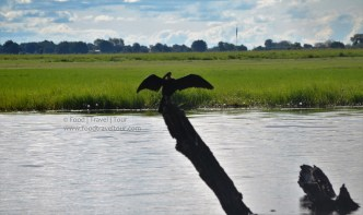 chobe-river-bird-6