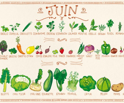 Légumes de saison / JUIN