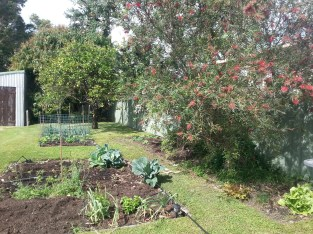 My main gardens at the start of planting, looking back to the lemon, lime and mango trees