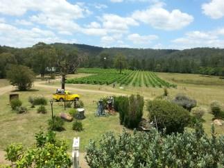 View from Wollombi Wines cellar door
