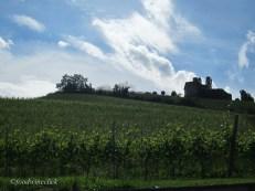 Vineyard and sky.