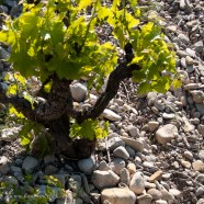 galets stony vineyard soil cotes du rhone
