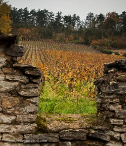 At the top of the hill above Volnay, these are Village Climats