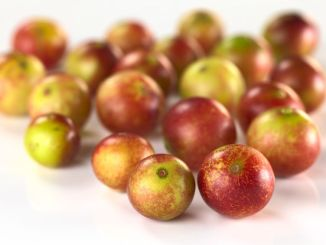 Camu camu berry fruits (lat. myrciaria dubia) which are grown in the amazon region and have a very high vitamin c content (selective focus, focus on the two berries in the front)