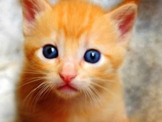 A full photograph of a ginger cat (kitten).