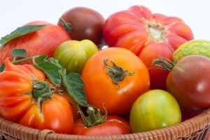 Full basket of homegrown organic heirloom tomatoes. Copyright: evgenyb / 123RF Stock Photoduring harvest time.