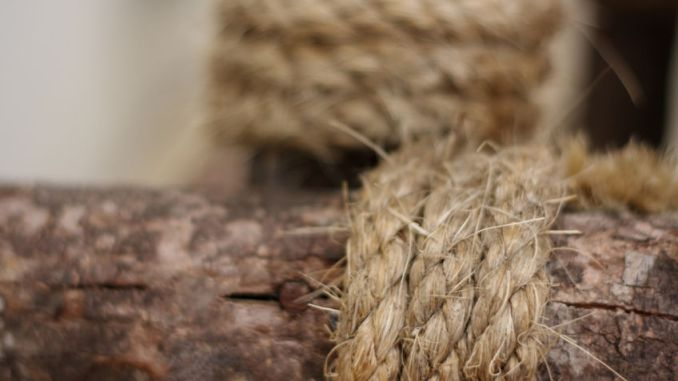 Kenaf in abstract background of blurred rope wrapped around log.