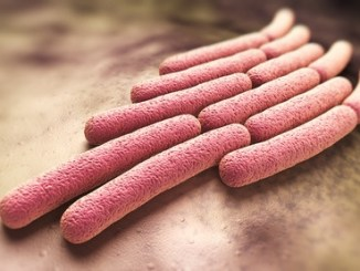 A 3D picture of Shigella bacteria - coloured rods.