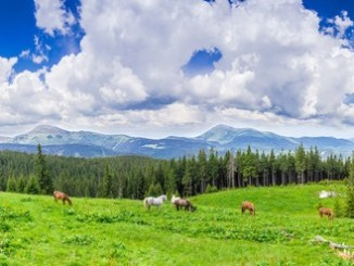 40326811 - mountain pasture with grazing horses against the backdrop of mountain range and sky with clouds. carpathian mountains.