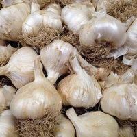 Solent Wight bulbs.