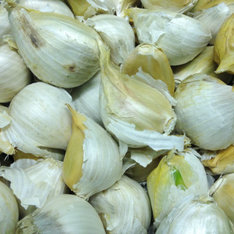 Bulbs of elephant garlic.
