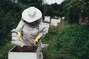 Honey being collected from a beehive by a well protected woman with yellow gloves.