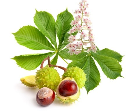 The Benefits Of Horse Chestnut Seed Extract - FoodWrite Ltd