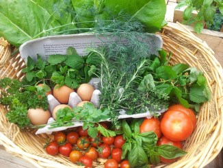 Fresh vegetables in a trug as an example of food sustainability