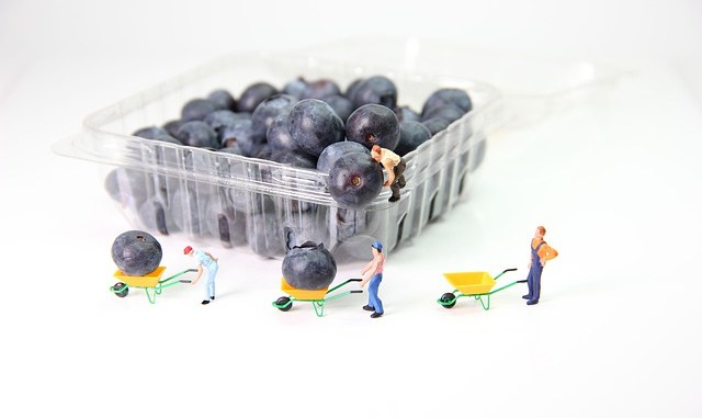 Blueberries which sit in a plastic package which may well have been part of modified atmospheric packaging (MAP)