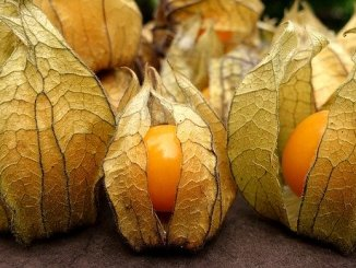 Cape gooseberry or physalis in a papery shell.