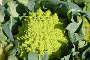 Romanesco, variety of broccoli and calabrese.