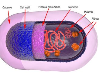structure of bacterial cell showing plasmids