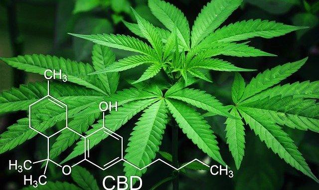 Cannabis, hemp, marijuana and a CBD molecule.