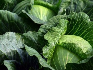 Cabbages. All fruit and vegetable cultivation would benefit from marker-assisted breeding.s