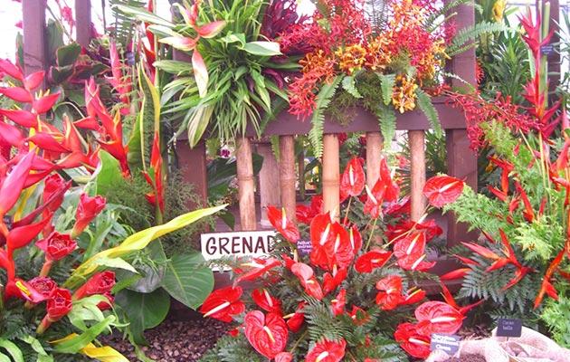 Grenada flowers