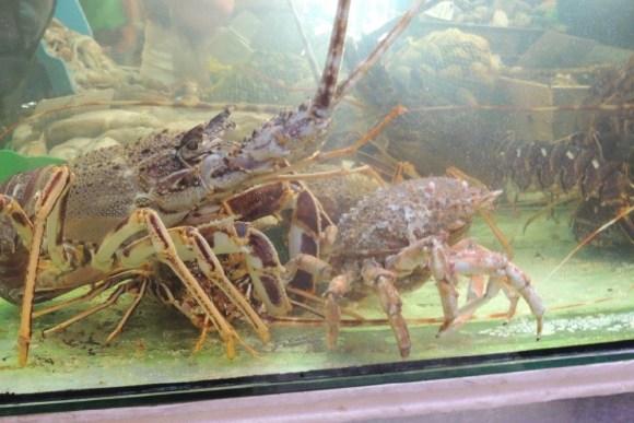Creatures of the deep - Palma Market