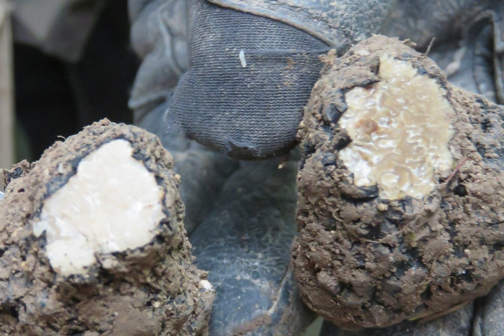 1. Truffles