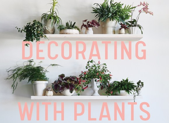 Decorating with Plants – What to choose, ways to style and how to make them thrive.