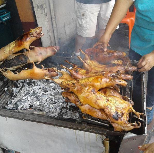cook-rats