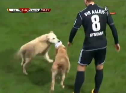 A dog pitch invasion during Galatasaray v VfR Aalen friendly match