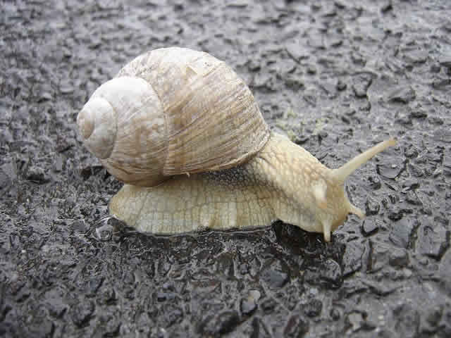 More Martín Demichelis jokes after Wigan's win over Manchester City compared the defender with a snail like this one