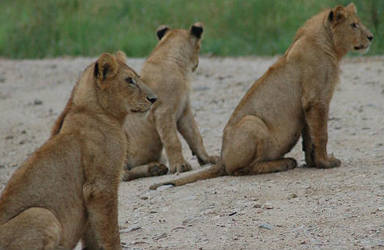 These Three Lions were enthralled by Slovenia 0-0 England