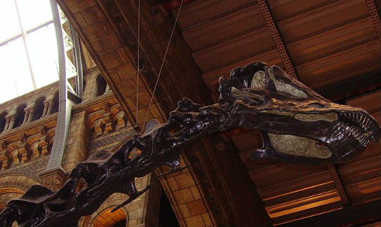 Dippy the Diplodocus is off to China