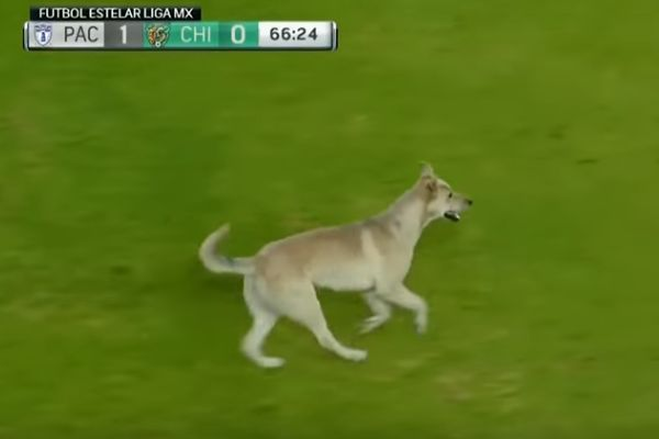 A dog and cat invade the pitch during Pachuca 1-0 Chiapas in Liga MX