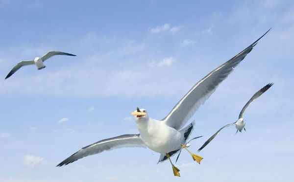 Seagulls with chips will still be welcome in Hull in 2017