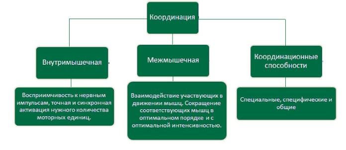 Виды координации