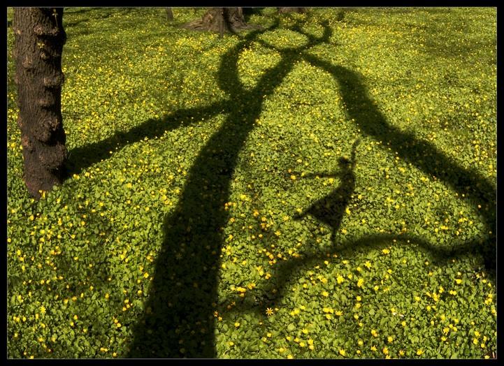 shadowplay3