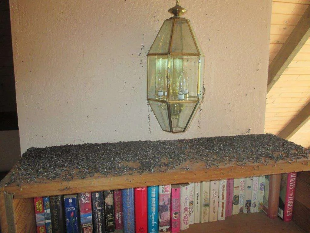 Bookshelf Around Bed Really Bad Bat Infestation In A Home - Foothill Sierra