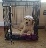 Lulu loves her crate!