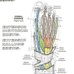 Top Of Foot Diagram 5 Pin Relay Circuit In 30 Days You Too Can Type And Play The Piano With Your